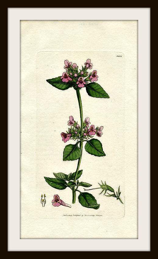 Basilico cosmetica