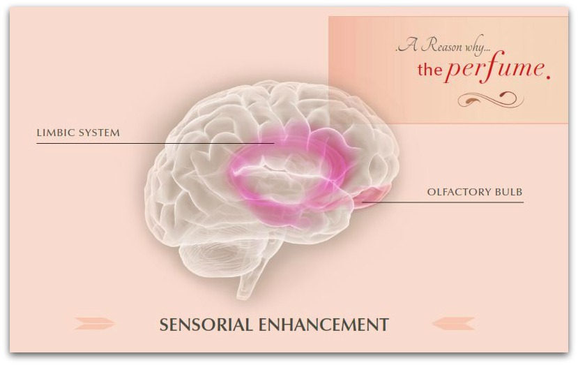 Cervello sistema limbico profumo