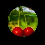 peduncoli ciliegie per cellulite